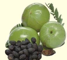 triphala-fruit